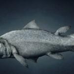 اصل الانسان سمكة