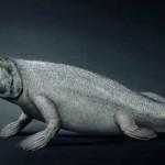 اصل الانسان سمكة 2