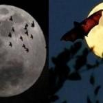 تضخم القمر